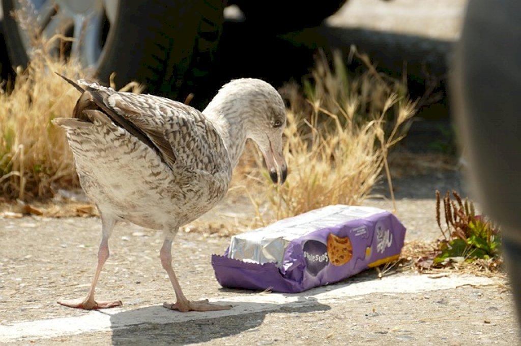 microplastics-in-verf-kunnen-problemen-geven-in-milieu